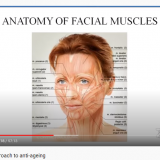 3-Dimensional approach to anti-aging